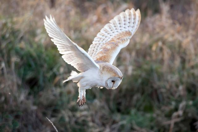 Owl, Bird, Nature, Animal, Plumage, Raptor, Wildlife