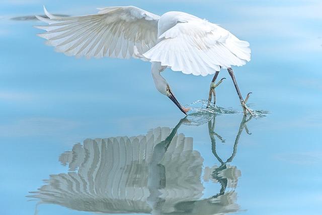 Heron, Bird, Nature, Animal, Wildlife, Beak, Water