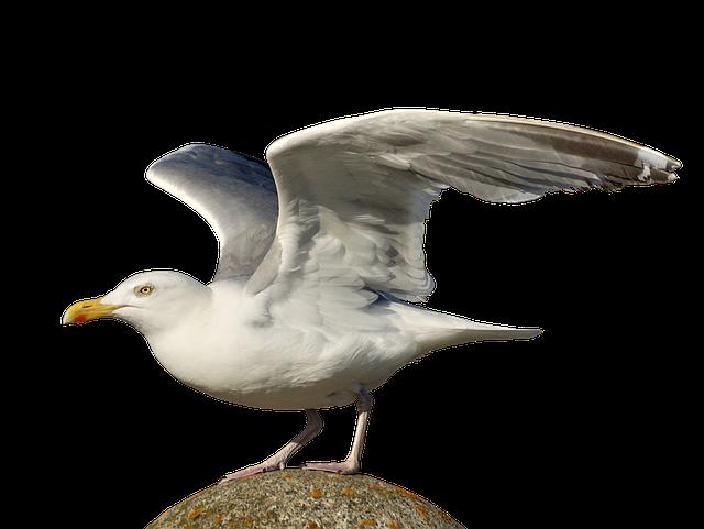 Gull, Departure, Start, Bird, Wing