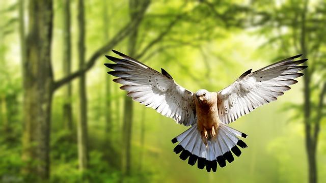 Wallpaper, Bird, Nature, Wildlife, Wing, Animal