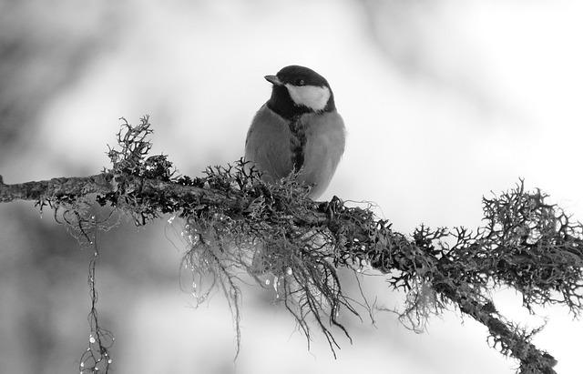 Winter, Tanning, Bird, Nature