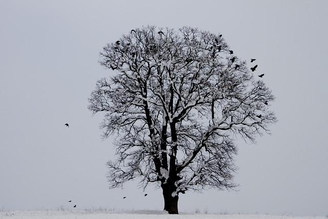 Winter, Bird, Tree, Snow, Nature, Landscape
