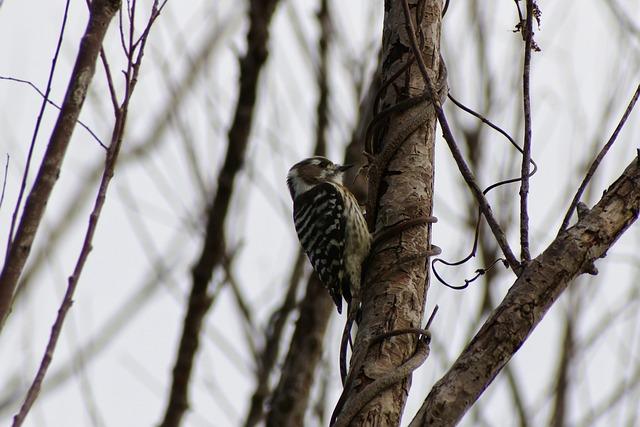 Animal, Forest, Wood, Bird, Wild Birds, Little Bird