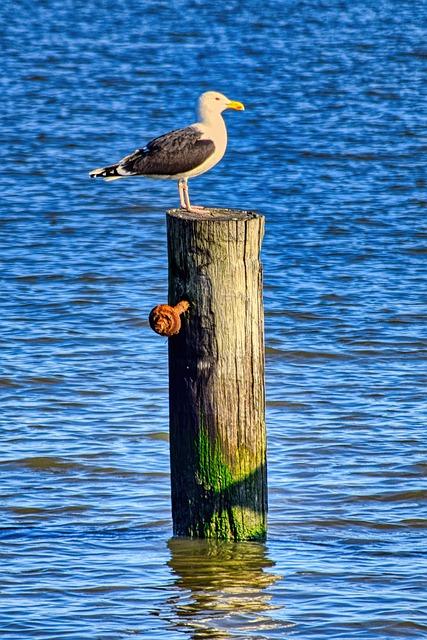 Seagull, Piles, Wood, Bay, Ocean, Pier, Bird, Port