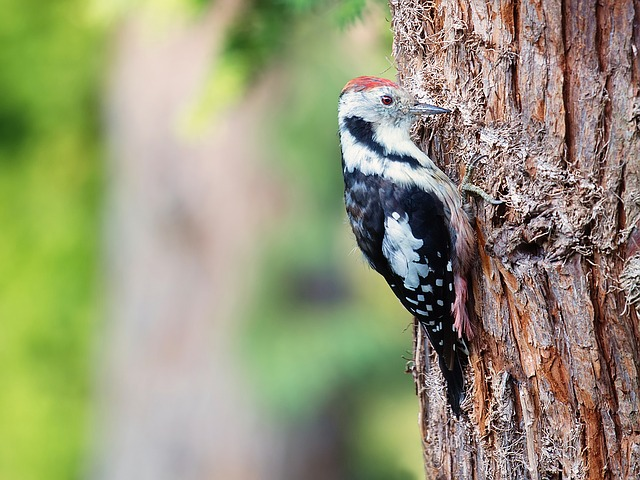 Woodpecker, Great Spotted Woodpecker, Bird, Animal
