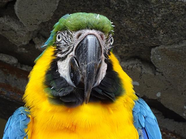 Ara, Parrot, Portrait, Bird, Colorful, Yellow Macaw