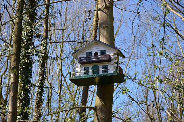 Bird Box, Birdhouse, Forest, Trees, Nature, Air