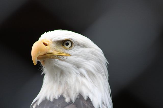 Birds, Wild Life, Bird Of Prey, Eagle, Nature, Peak