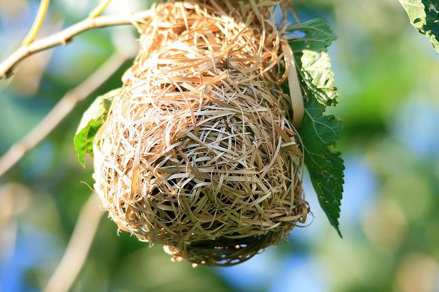 Bird's Nest, Nest, Bird's, Weaver's, Dried, Bleached
