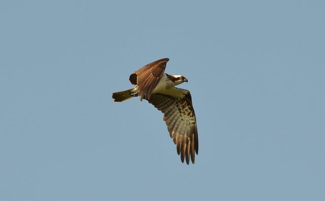Birds, Animal Life, Nature, Flight, Animals, Wing