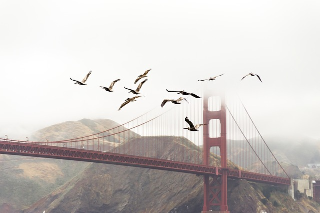 Birds, Bridge, Flight, Flock, Flying