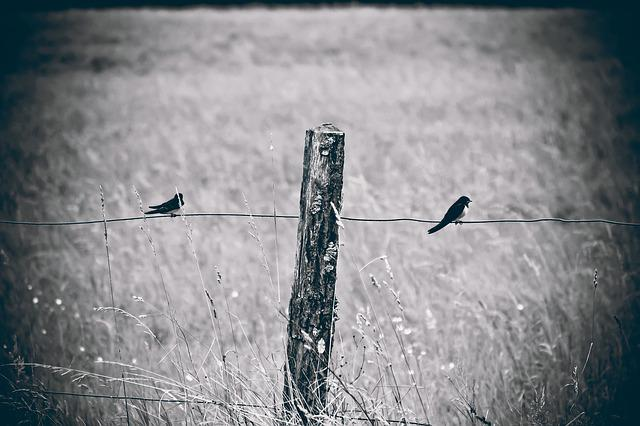 Fence, Birds, Nature, Swallows, Forest, Field