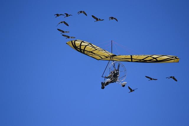 Glider, Geese, Sky, Herd, Flight, Birds