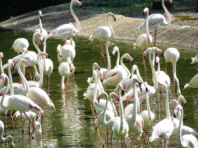 Heron Birds, White, Birds, Group