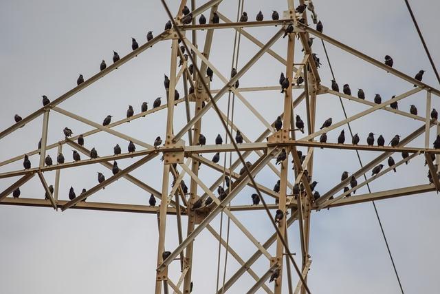 Pylon, Sky, Wire, Birds, Migratory Birds, Resting