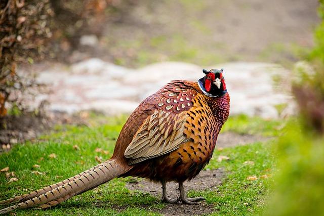 Nature, Birds, Animals, Outdoor, Animal Life, Wild