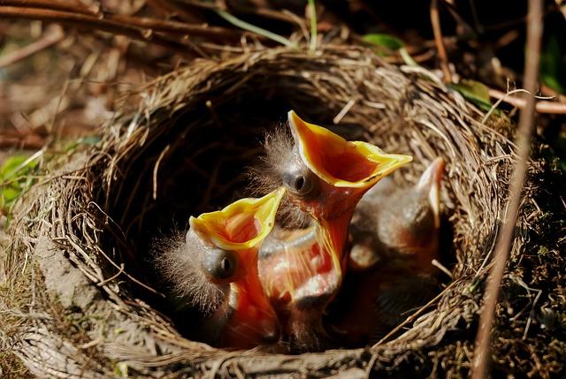 Nest, Chicks, Bird's Nest, Birds, Nature, Clutch