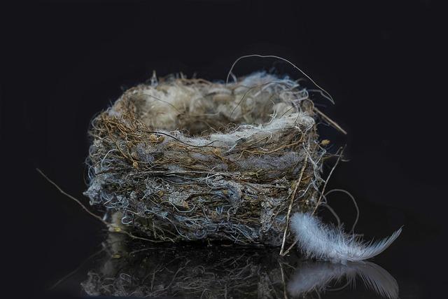 Bird's Nest, Nest Building, Nest, Bird, Feather, Nature