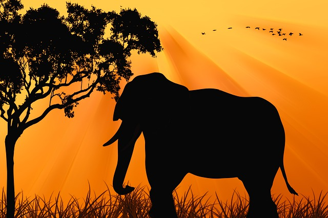 Elephant, Sunset, Silhouette, Dawn, Nature, Tree, Birds