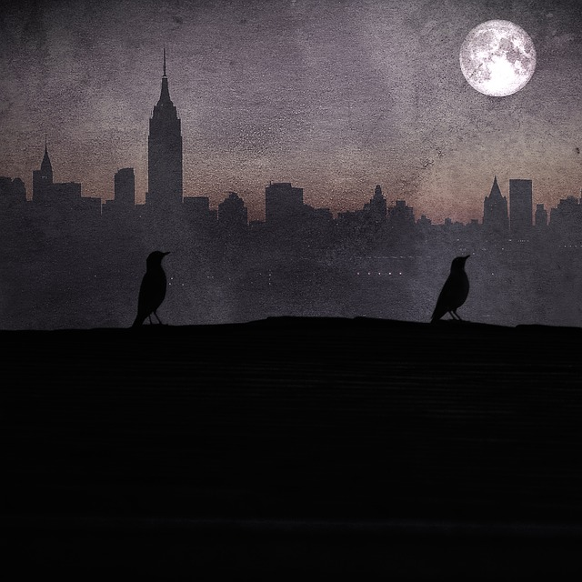 Birds, Rooftop, Spooky, Mysterious, Shadow, Silhouette