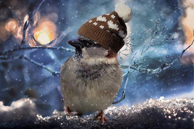 Sparrow, Birds, Sperling, Feather, Winter, Snow, Cold