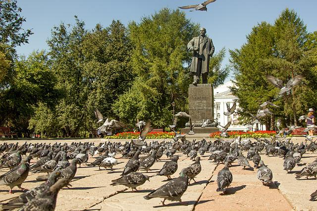 Pigeons, Lenin, Area, Birds, Summer