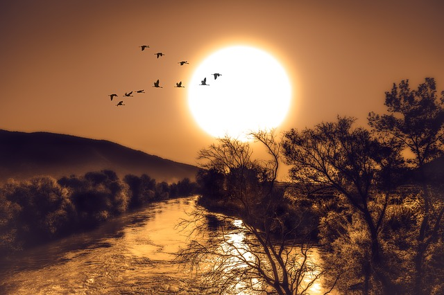 Sun, River, Trees, Birds, Sky, Sunset, Nature