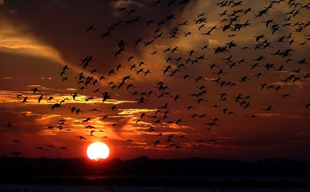 Flamingos, Swarm, Birds, Sunset