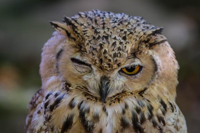 Wild Life, Birds, Nature, Strigiformes, Bird Of Prey