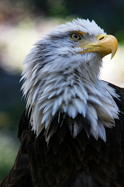 Birds, Eagle, Bird Of Prey, Wild Life, Nature