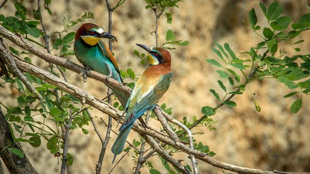 European Bee-eater, Bird, Birds, Wildlife