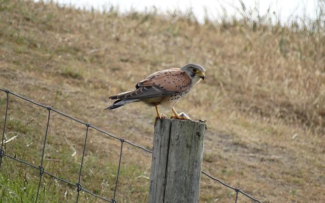 Nature, Wildlife, Animal Kingdom, Birds