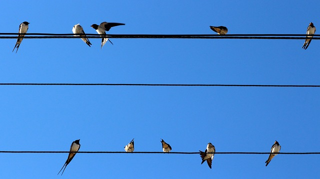 Swallow, Birds, Wire, Stol