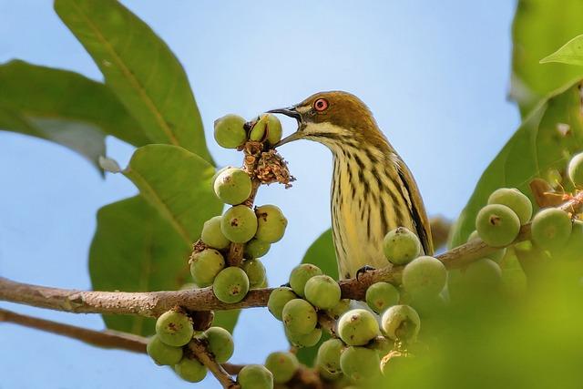 Birds, Yellow, Twigs