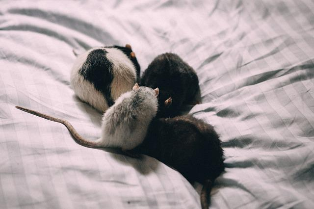 Animals, Adult, Alergy, Bed, Black, Care, Cosy, Cute