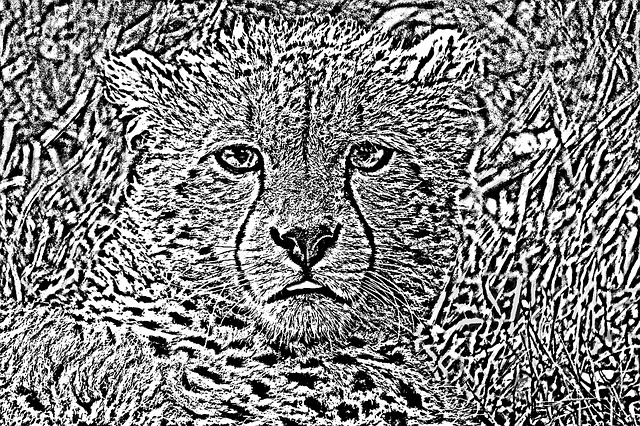 Lynx, Animal, Africa, Black And White, Figure
