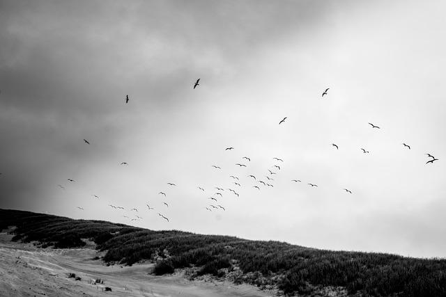Birds, Nature, Fly, Black And White, Animal, Bird