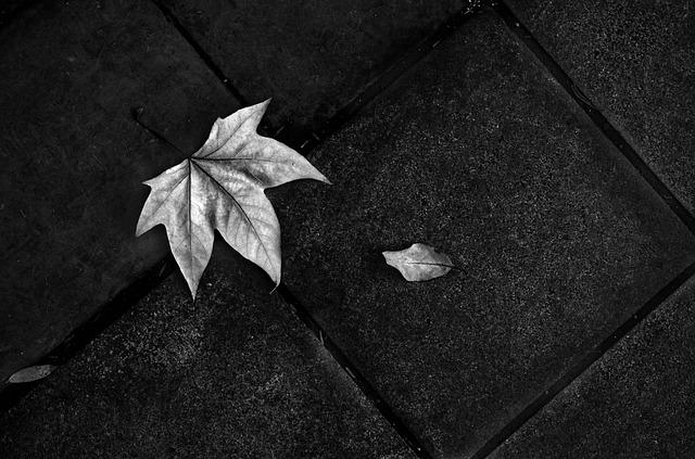 On The Ground, Floor, Leaf, Black And White