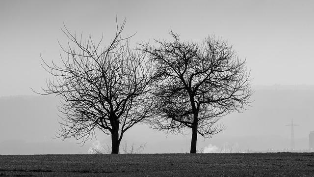 Black And White, Trees, Black And White Photo, Scenic