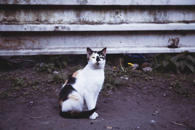 Animals, Black, Brown, Cat, Color, Ground, Kitty