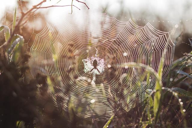 Nature, Animal, Arachnid, Background, Beads, Black