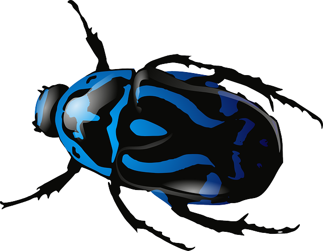 Beetle, Insect, Bug, Blue, Black, Legs, Body, Animals