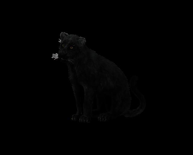 Panther, Black Big Cat, Sit, Mystical, Predator