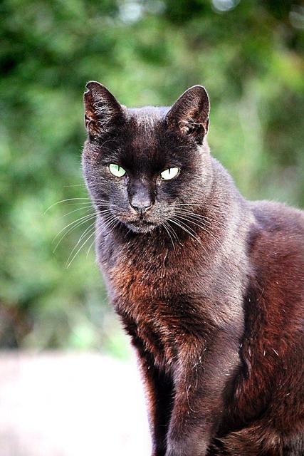 Cat, Black, Pet, Black Cat, Animal, Cat's Eyes, View