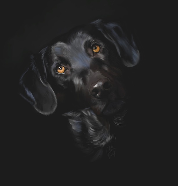 Black, Labrador, Black Labrador, Dog