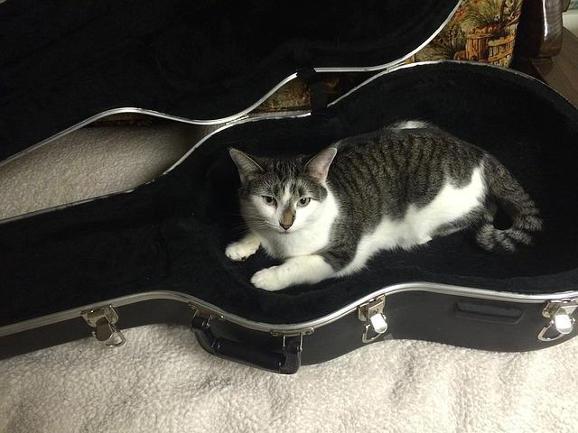 Cat, Guitar Case, Animal, Case, Guitar, Black