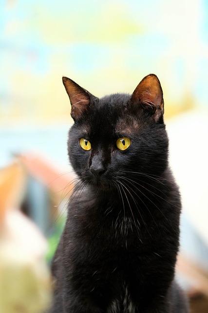Cat, Black, Black Cat