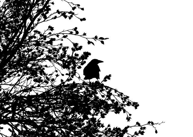 Bird, Carrion Crow, Crow, Raven Bird, Black, Animal