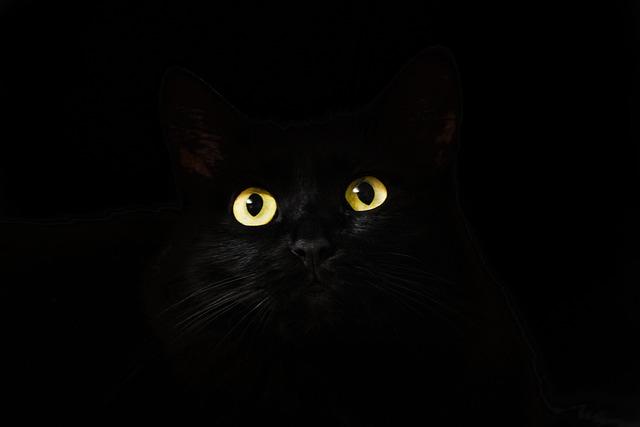 Black, Cat, View, Cat Eyes, Cat Looking, Cute
