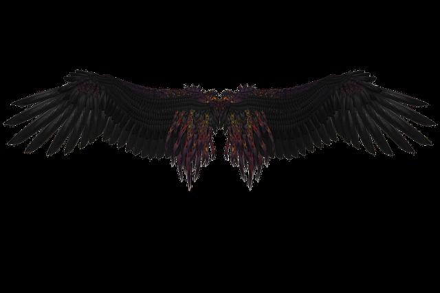 Wing, Feather, Angel, Fly, Black, Black Engel, Mystical